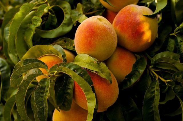 owoce brzoskwinie